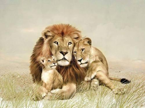 Lion Family. Fuente: http://eskipaper.com/